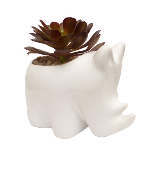 Matera rinoceronte